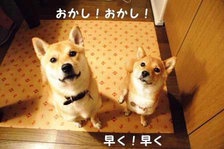 2008_06260159.jpg
