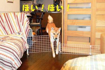 2008_07020009.jpg