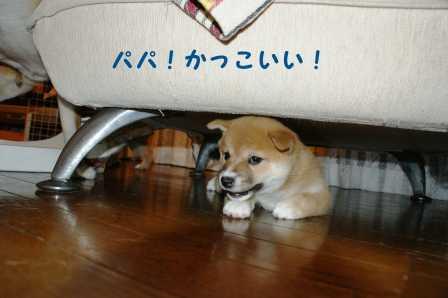 2008_07020026.jpg