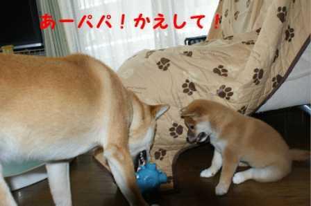 2008_07060114.jpg