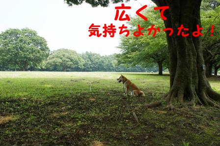 2008_07060127.jpg