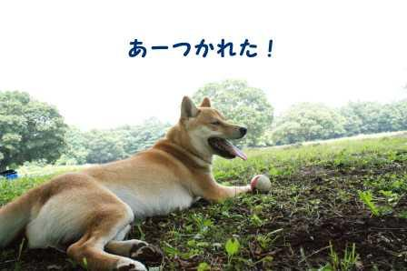 2008_07060139.jpg