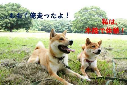 2008_07060198.jpg