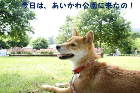 2008_07200107.jpg