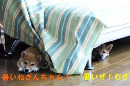 2008_08030019.jpg