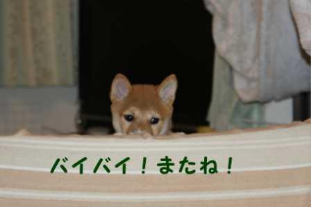 2008_08110134.jpg
