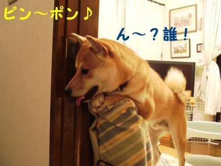 2008_08140025.jpg