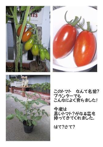 トマトちゃんたち勢ぞろい