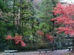 弁天池の紅葉
