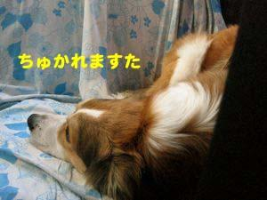 2008091518.jpg