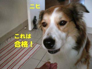 2008092307.jpg