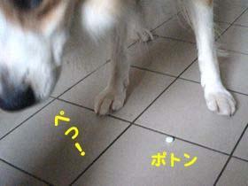 2008092308.jpg