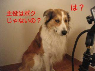 2008092407.jpg