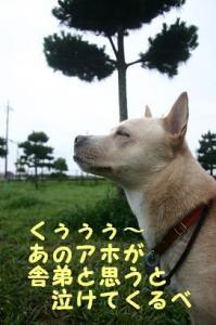 キャンプ桂0807 (6)