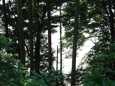 20080705_3_tenryuugawa.jpg