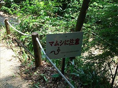 20080705_4_mamushi.jpg