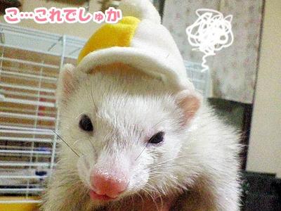 はるの帽子姿☆