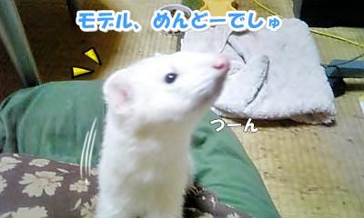 ゆうちゃんの一言☆