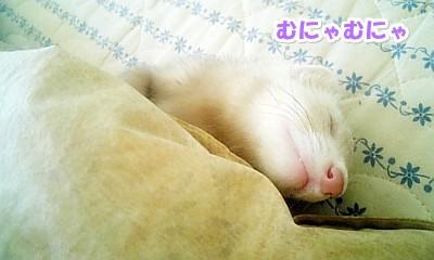 添い寝中のなな パート2☆