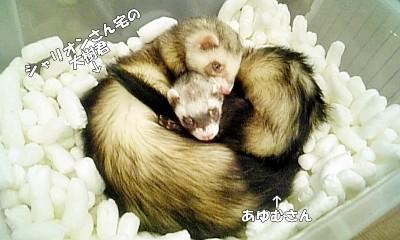 あゆむさんと大樹君のツーショット☆