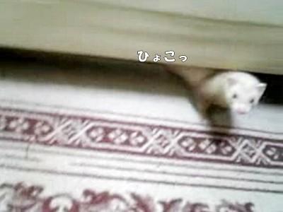 ベッドの下からこんにちは?
