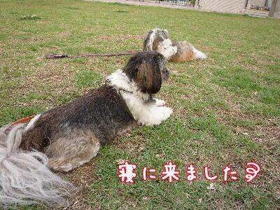 P1010087_20080711133919.jpg