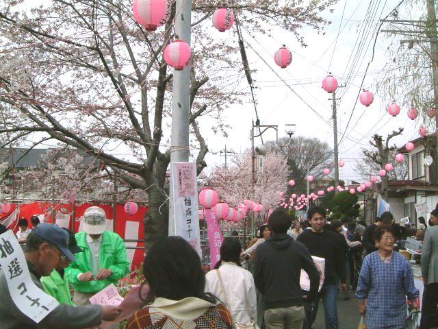 東村山西口桜まつり