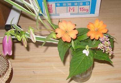 松本仙翁、蛍袋、山あじさい、縞葦