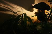 小さな「都筑の森」5