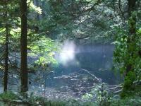 沸壺の池の木洩れ日