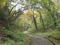 大神山神社参道石畳2