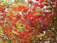 山の紅葉3