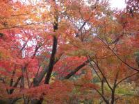 渓谷の紅葉2