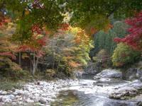 渓谷の紅葉4