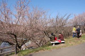 岡山県津山市神代梅の里公園梅祭り(作州津山商工会久米地区)