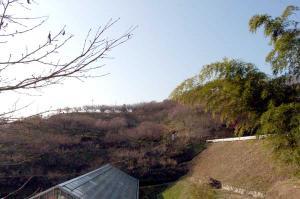 津山市神代梅の里公園梅の開花状況