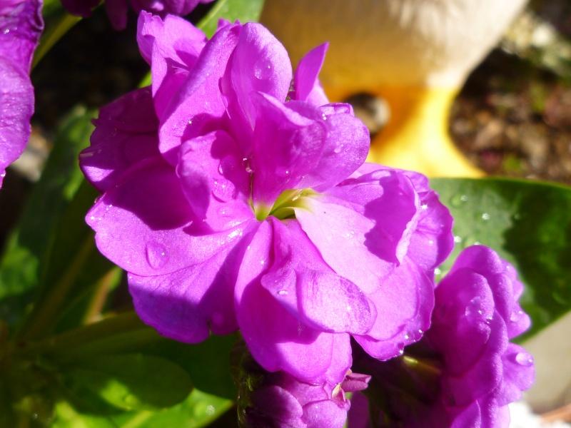 デジイチでの花2