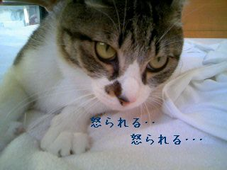 PA0_0096-091104.jpg