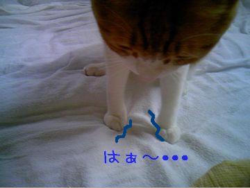 PAP_0040-100701.jpg