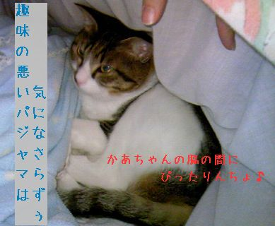 PAP_0126-100227.jpg