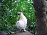 烏骨鶏の自然養鶏6