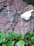 烏骨鶏の自然養鶏9