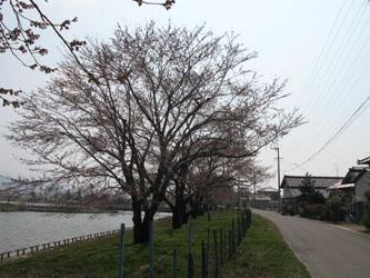 IMG_2571sakura.jpg