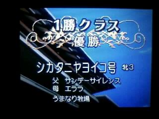 よゐこ_090411_01