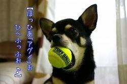 blog20080907d_convert_20080907005257 ラルフkun