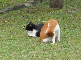 catcat.jpg