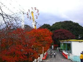 flower wheel