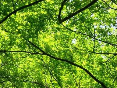 more greens