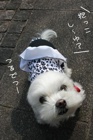 3_12_3779.jpg