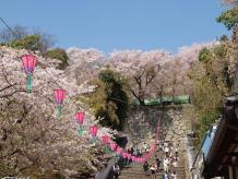 鶴山公園1